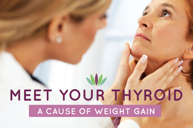 Meet Your Thyroid A Cause Of Weight Gain Myersdetox Com