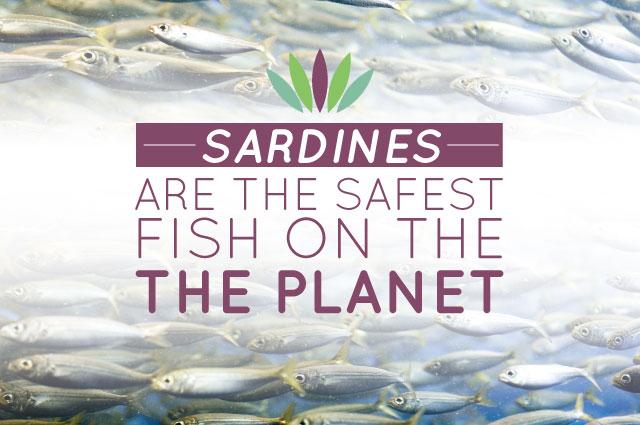 Sardines are the Safest Fish on the Planet - Myersdetox com